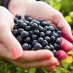 Acai Berry: propiedades y beneficios antioxidantes