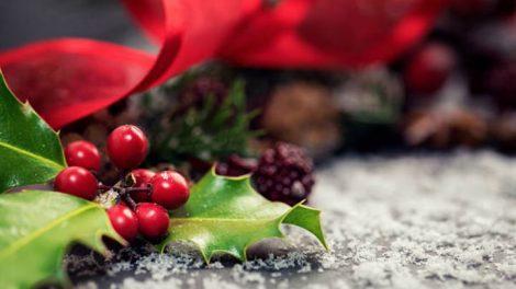 El acebo de Navidad