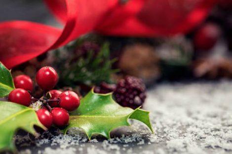 El acebo de Navidad: origen, tradición y curiosidades