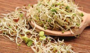 Los impresionantes beneficios de la alfalfa y sus propiedades