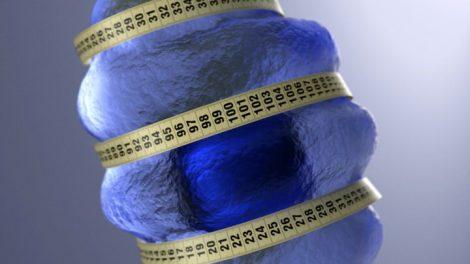 Alimentacion hipocalorica y gen de longevidad