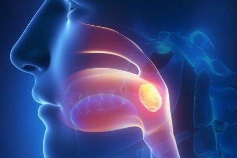 Qué son las amígdalas y para qué sirven