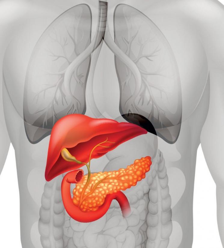 el apio es bueno para el acido urico acido urico gota tratamiento natural alimentos prohibidos cuando tienes acido urico