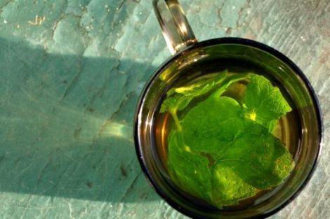 Analgésicos naturales: plantas para calmar el dolor
