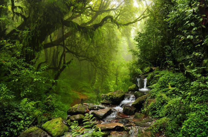 Qué es el baño de bosque