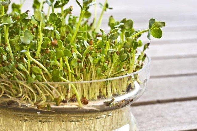 ¿Cuáles son las propiedades de la alfalfa?