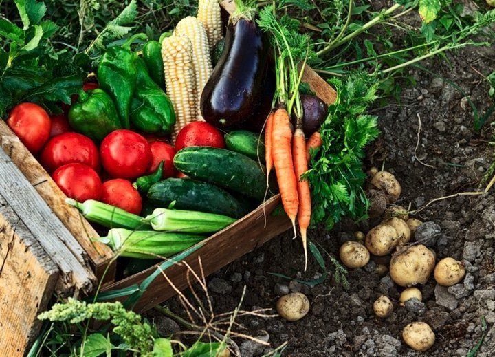Los beneficios de los alimentos ecológicos