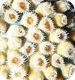 beneficios-calcio-coral