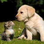 Por qué es tan bueno tener perros y gatos en casa