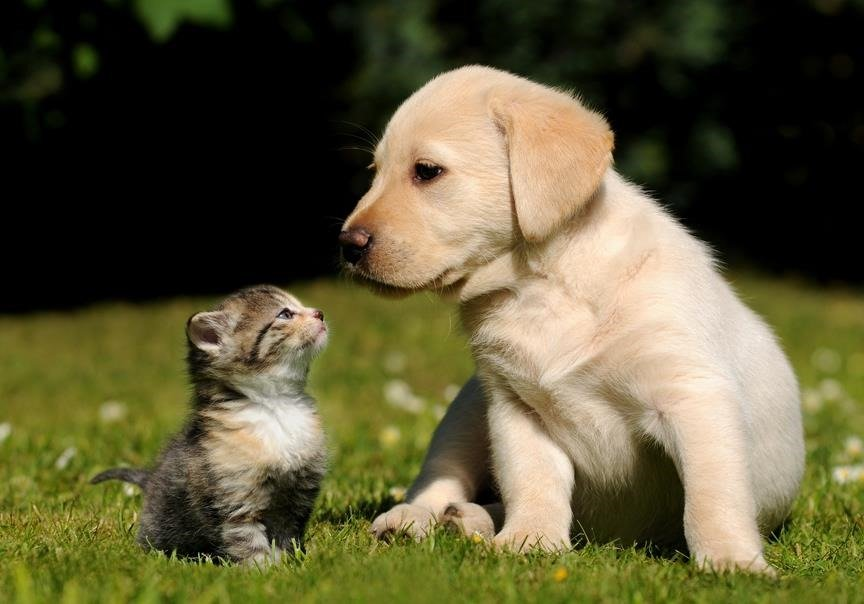 beneficios-gatos-y-perros