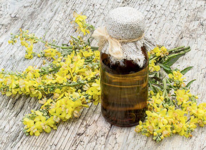 Beneficios medicinales del gordolobo