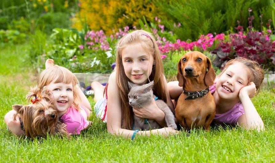 beneficios-mascotas