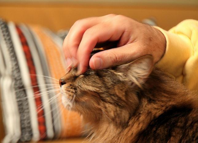 Beneficios de tener mascotas en casa