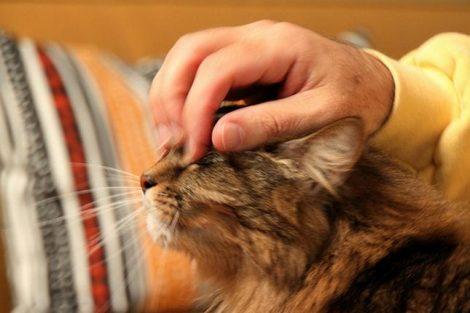Mascotas: beneficios para la salud física y mental