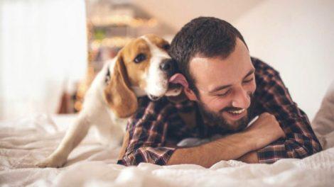 beneficios-perros
