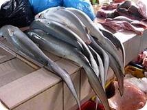 beneficios tiburon