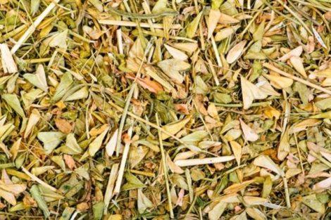 Bolsa de pastor: beneficios, contraindicaciones y efectos secundarios