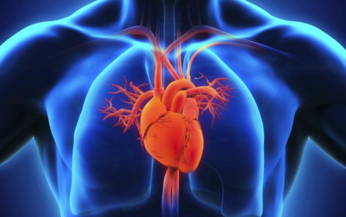 El boniato es bueno para el corazon