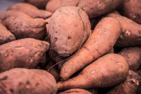 ¿Es adecuado comer boniato o batata cruda? Cuidado con la dioscorina