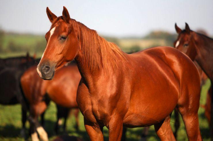 Cualidades de la terapia con caballos