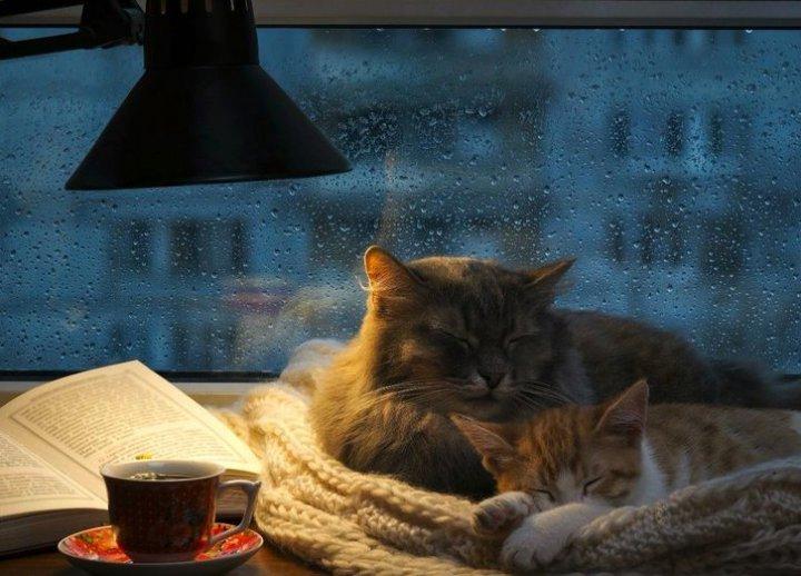Café enemigo de dormir bien