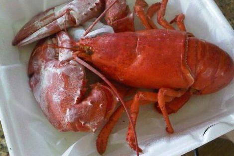 Cuántas calorías aporta el marisco