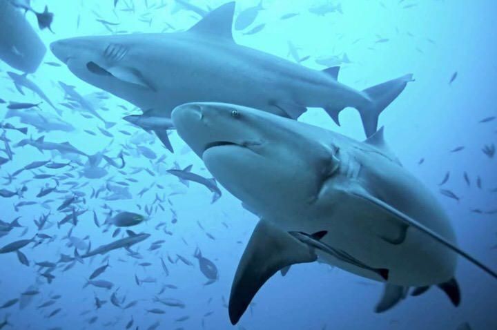 Beneficios del cartilago de tiburon
