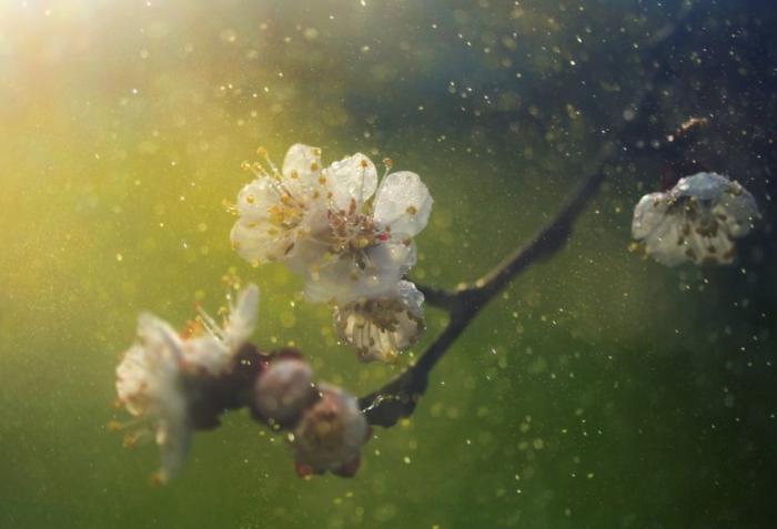 Causas de la alergia primaveral