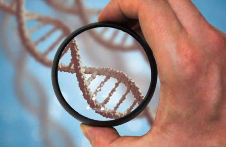 Los genes pueden ser una causa de hepatitis autoinmune