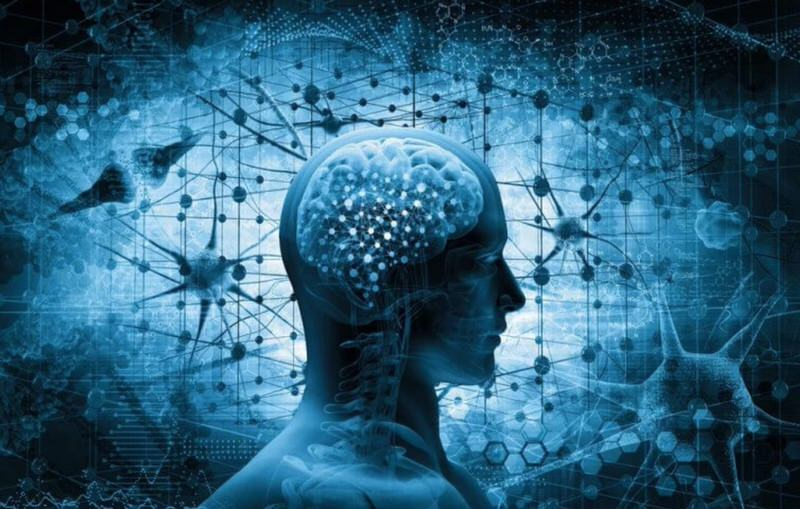 Neuronas y cerebro