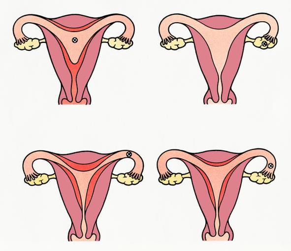 El ciclo menstrual de la mujer