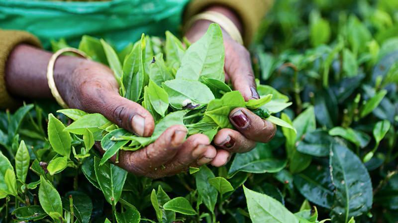Como coger tus plantas medicinales