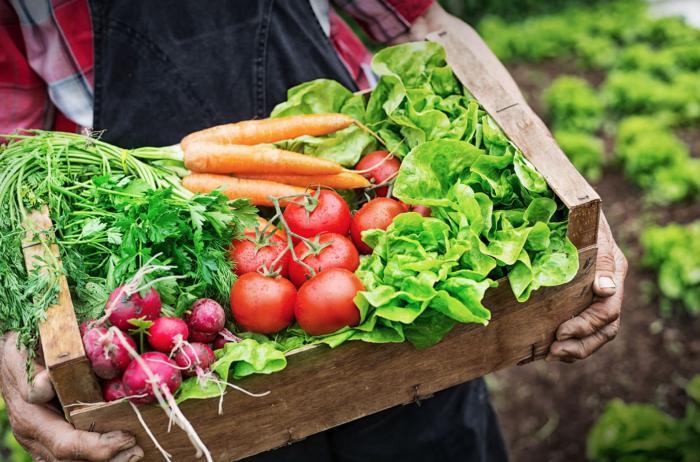 Comer ecologico