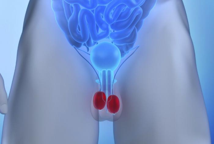 Riesgos de golpear los testículos