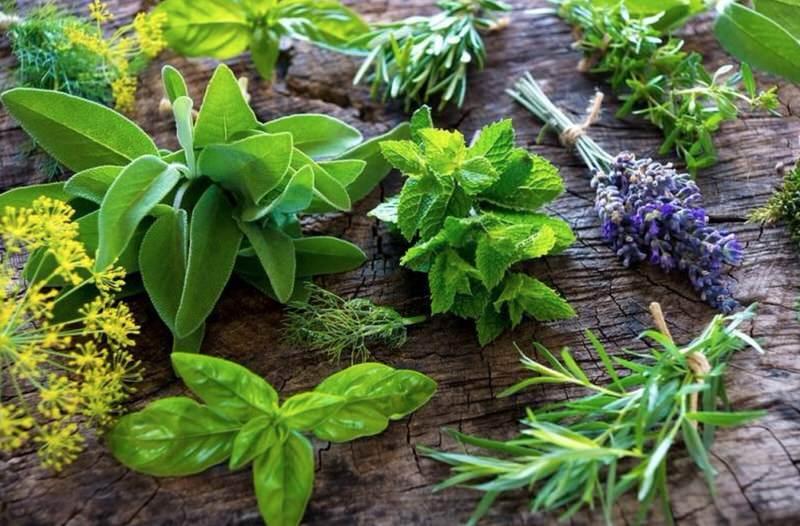Consejos para secar plantas y hierbas