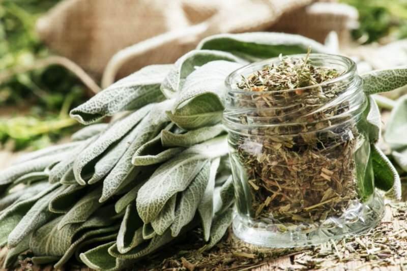 Conservación de plantas medicinales