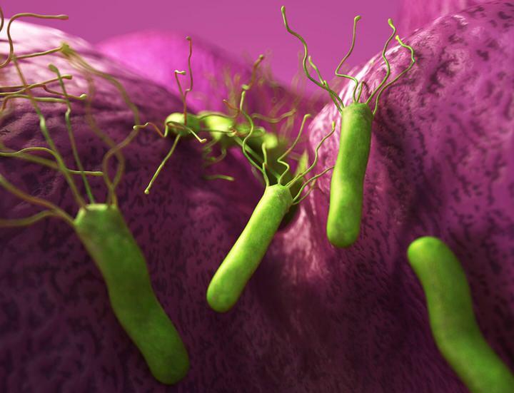 Cómo se contagia el helicobacter pylori