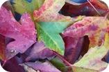 Cuidados para el otoño
