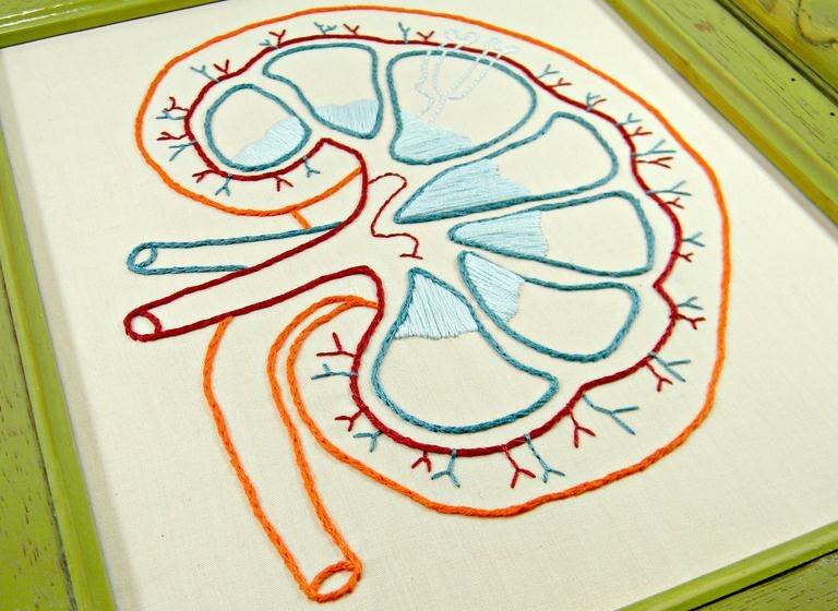 Los riñones y el dolor de ovarios