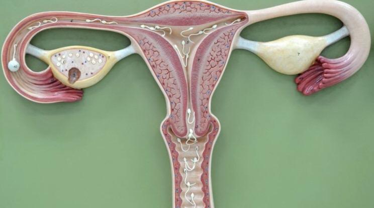 Riesgo de embarazo en la menopausia