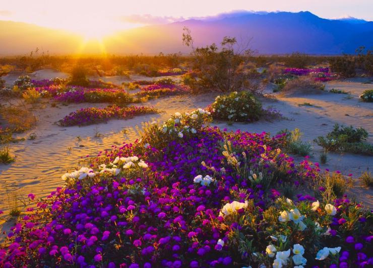 Las maravillosas esencias florales de California