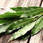 Eucalipto: beneficios y propiedades para la salud y la piel