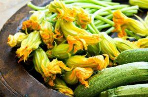 Flores de calabacín: qué son, beneficios y cuándo recogerlas