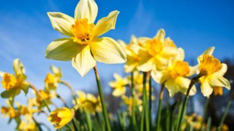 flores-california