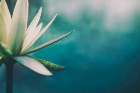5 frases budistas para alcanzar el equilibrio zen