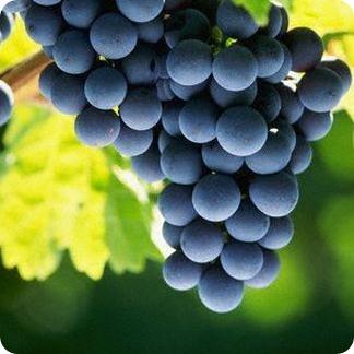 Diciembre: frutas de temporada