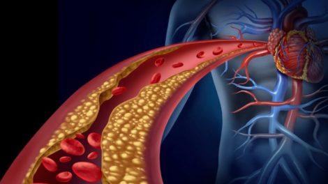 Funciones del colesterol