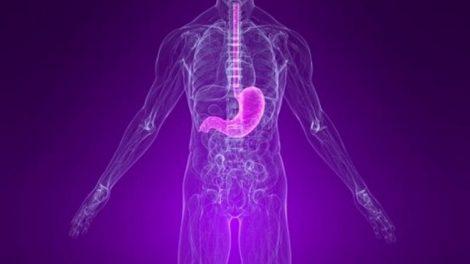 Principales funciones del estómago