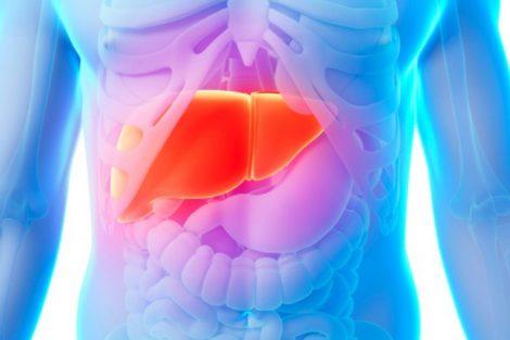 Qué es el hígado, para qué sirve y funciones principales