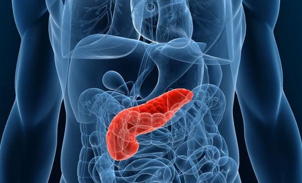 Funciones del páncreas